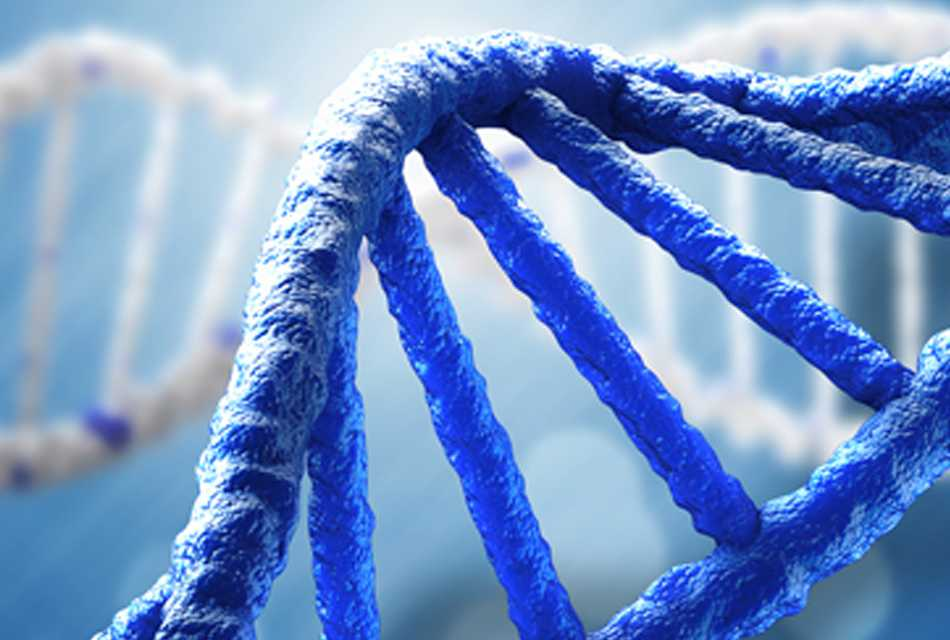 The Role of Genetics and AMD